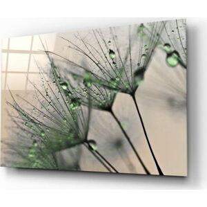 Skleněný obraz Insigne Green Dandelion,72 x46cm