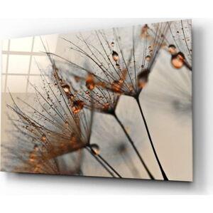 Skleněný obraz Insigne Cinnamon Dandelion,72 x46cm