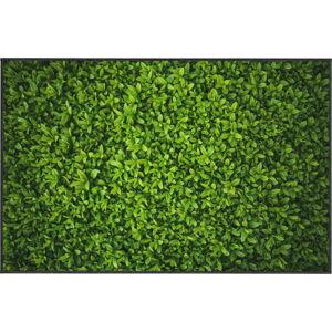 Zelený koberec Oyo home Ivy, 140x220cm